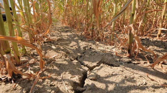 Effetti della siccità in un campo (foto d'archivio)