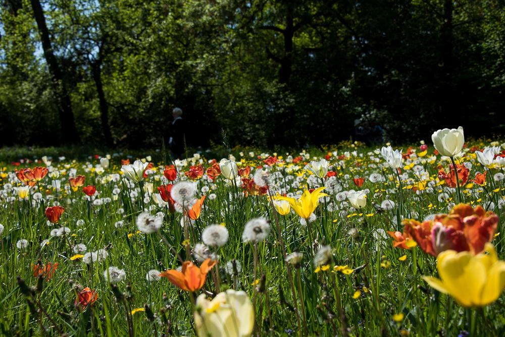 Giardinity aprile 2017_30