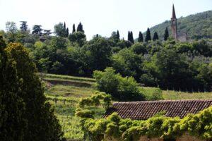 Colli Berici terra di grandi vini rossi