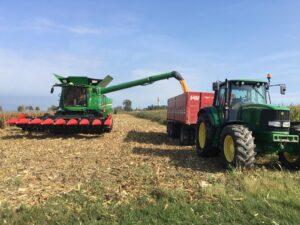 La trebbiatura del mais